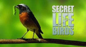 BBC: Secret Life of Birds