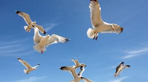 BBC: The Life of Birds